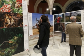 "Exposición 'World Press Photo 2016' en la Fundación Cajasol (Sevilla) • <a style=""font-size:0.8em;"" href=""http://www.flickr.com/photos/129072575@N05/26645428006/"" target=""_blank"">View on Flickr</a>"