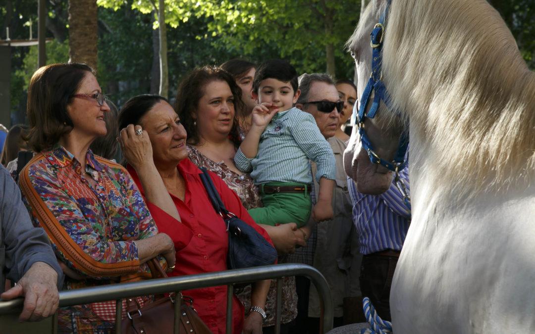 Exhibición de caballos de rejoneo en la Plaza Nueva de Sevilla
